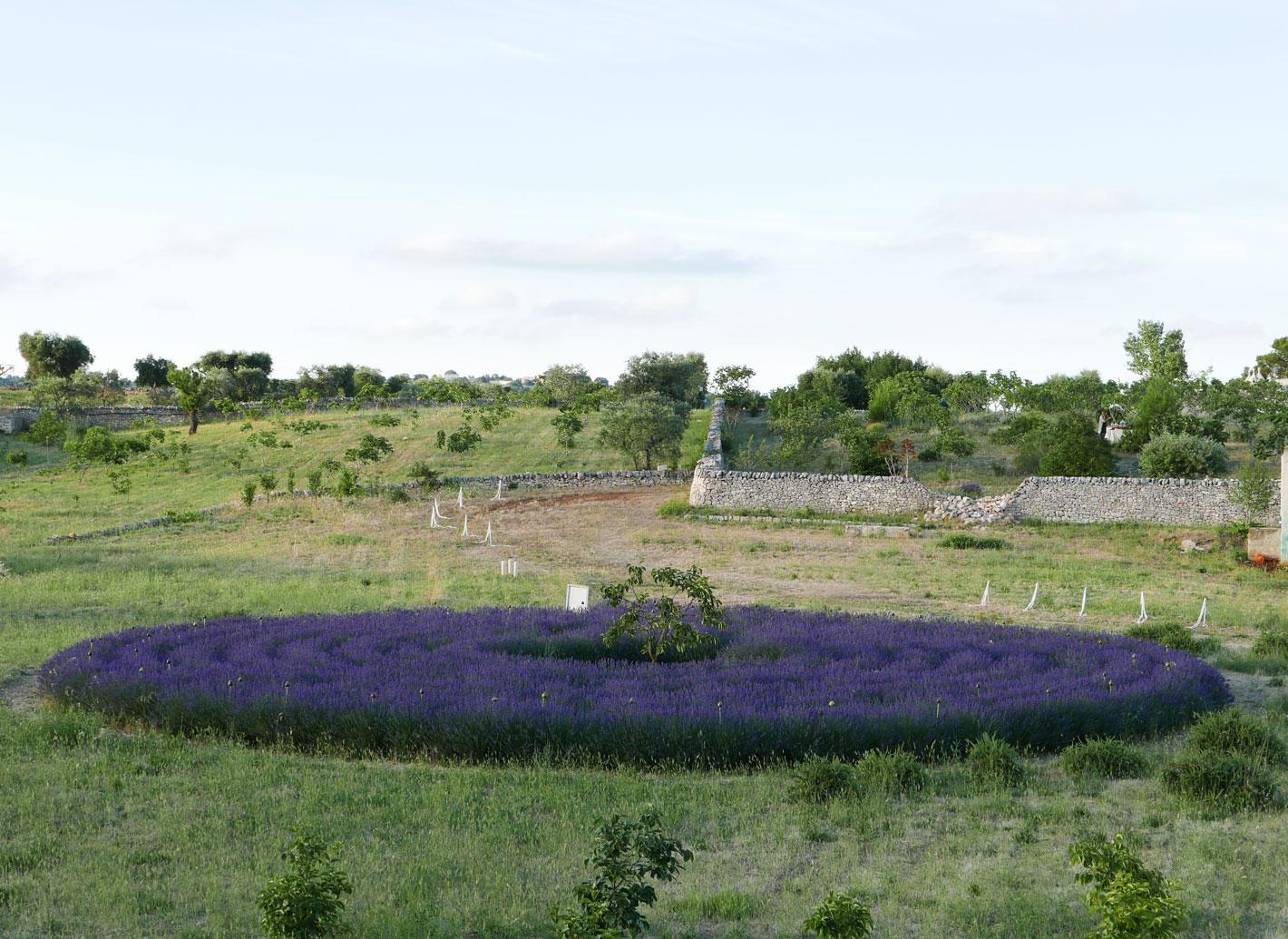 Conservatorio botanico I Giardini di Pomona: un tesoro di biodiversità nel cuore della Valle d'Itria