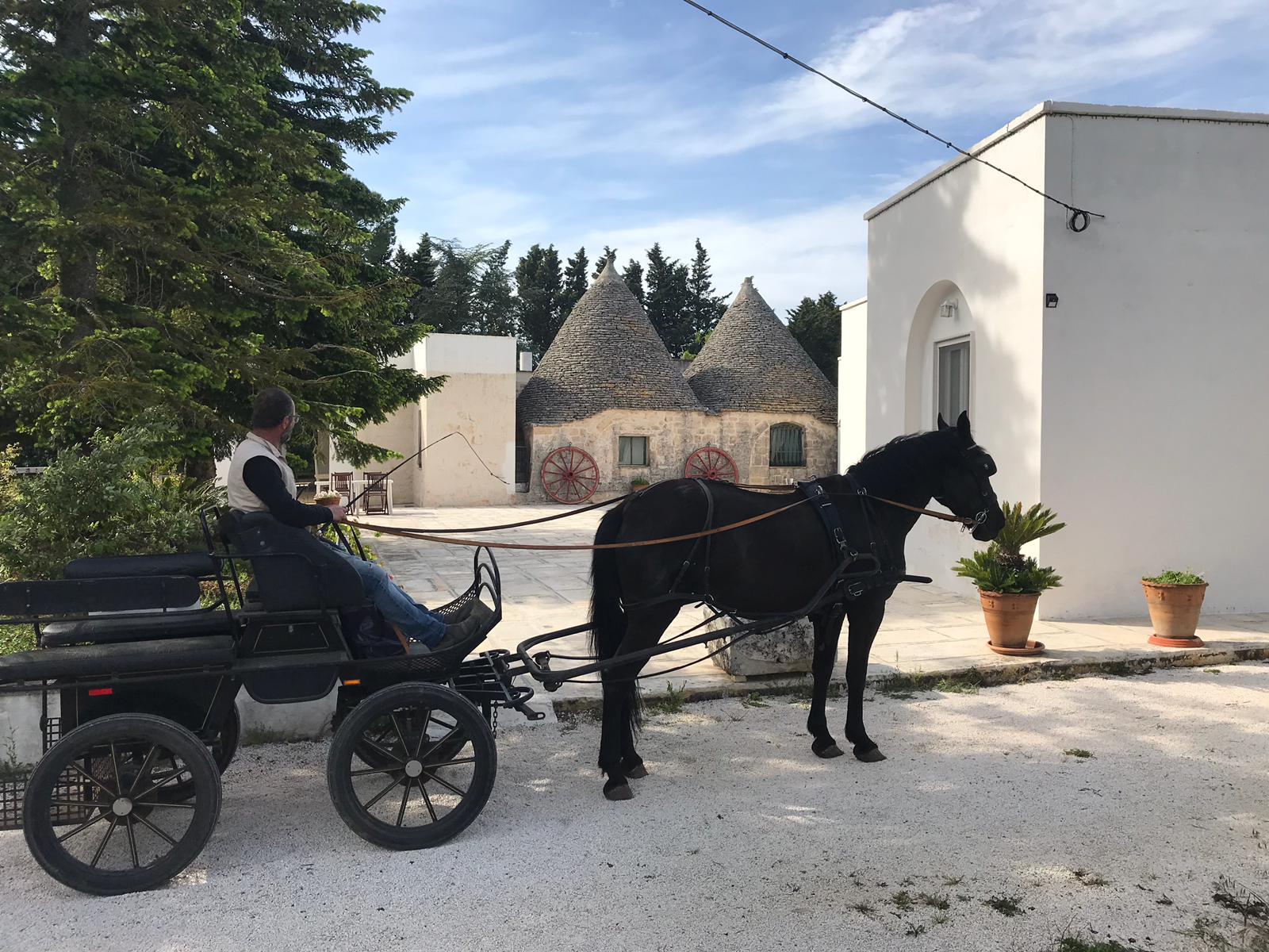 Passeggiata in carrozza nella campagna martinese